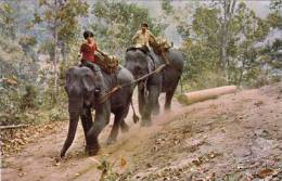 THAILAND - WORKING ELEPHANTS - Elephants