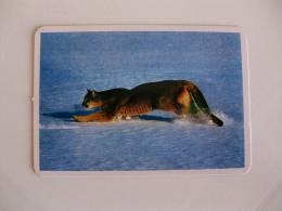 Wild Animal Portuguese Pocket Calendar 1993 - Calendarios
