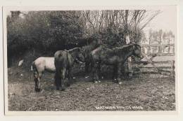 Dartmoor Ponies - RPPC - England