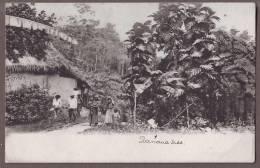TRINIDAD   A Peasant's Home  Tr40 - Trinidad