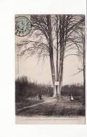Carte 1905 BOIS GUILLAUME / FORET VERTE / HETRE DES CINQ FRERES (arbre) - France