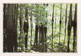 Etats-Unis,USA, Louisiana,Branch Of The Mississippi Invaded By Trees,Editeur:Edito-Service S.A.,Imprimé En CE.,reedition - Etats-Unis