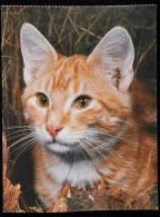 LOT OF 4 POSTCARDS GATTO Felis Silvestris Catus CAT 貓 Katze кошка 猫 ق& - Gatti
