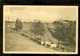 Quaremont - Kwaremont - Kluisberg - Kluisbergen - Mont De L´ Enclus :  Eene Quaremontsche Weide - Kluisbergen