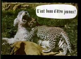 DEUX AMIS ! - Humor