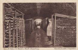 Luxembourg - Remich Sur Moselle - Cave - Viticulture - Remich