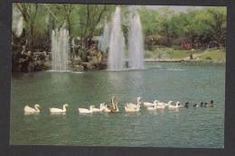 DPR KOREA North POSTCARD A Pond, Ducks In Lake, Unused Mint - Korea, North