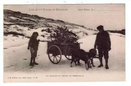 Iles Saint Pierre Et Miquelon/975/Un Attelege De Chiens De Terreneuve/Réf:2882 - Saint-Pierre-et-Miquelon