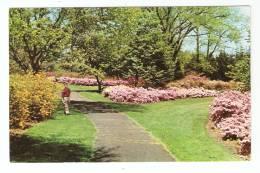 CPA - Elizabeth : Azalea Gardens In Warinanco Park - Elizabeth