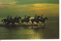 Bahrain-sea Coast-the Hunters Of The Dawn - Bahrein