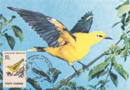 BIRDS,PASSEREAUX,CM,MAXI CARD,MAXIMUM CARD,1994,ROMANIA - Passereaux