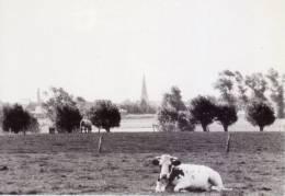 Knesselare  -  Ursel  -  Panorama Vanaf De Wagenmakersbeek - Knesselare