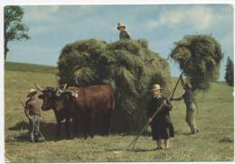 AGRICULTURE  L  15     /  ATTELAGES   /   LES FOINS    CPM / CPSM  10 X 15 - Attelages
