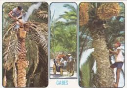 Cp , TUNISIE , GABES , Souvenir De LOasis De Gabes - Tunisie