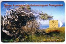 TAAF - 29 - LUXE - TAAF - Franz. Süd- Und Antarktisgebiete