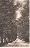 CPA 1908  Shrewbury ,Central  Avenue ,    Quarry - Shropshire