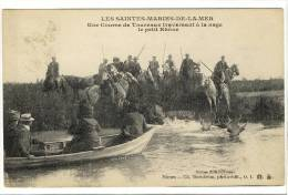 Carte Postale Ancienne Saintes Maries De La Mer - Une Course De Taureaux Traversant à La Nage Le Petit Rhone - Saintes Maries De La Mer