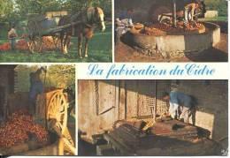 N°24381 -cpsm La Fabrication Du Cidre - Agriculture