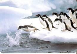 CALENDARIO DEL AÑO 2000 DE UNOS PINGUINOS (PENGUIN) (CALENDRIER-CALENDAR) - Tamaño Pequeño : 1991-00