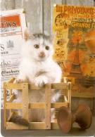 CALENDARIO DEL AÑO 2012 DE UNO GATO (CAT) (CALENDRIER-CALENDAR) - Calendarios