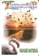 CALENDARIO DEL AÑO 1999 DE UN FLAMENCO BIRD- PAJARO-TORREVIEJA   (CALENDRIER-CALENDAR) - Tamaño Pequeño : 1991-00