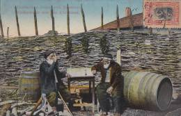 Bulgarie -  Ihtiman - Centenaires - Barriques Vin - Bulgarie