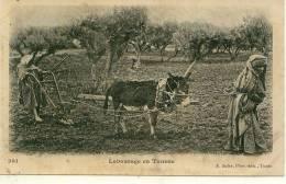 TUNISIE  - Labourage ( Charrue âne )  PRIX FIXE - Tunisie
