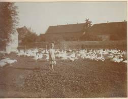 Bauerndorf An Der Saale Bei Merseburg, Saalekreis, Sa.-Anh., Gänseliesel, Madchen Hütet Gänse, W, FOTO 1921, Original - Orte