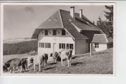 NATURFREUNDE - NFH - NFI - Naturfreundehaus Hatzenwald Kreis Säckingen - Landpoststempel Altenschwand - Gewerkschaften