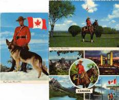 3 CP - Royal Canadian Mounted Police - Cheval - Chien    (48037) - Alberta