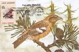 BIRDS,CM,CARTE MAXIM,MAXI CARD,1993,ROMANIA - Cigognes & échassiers