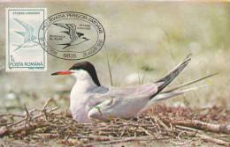 BIRDS,EXPIDITION PHILATELIC,CM,CARTE MAXIM,MAXI CARD,1991,CLUJ-NAPOCA,ROM ANIA - Cigognes & échassiers