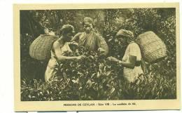 SRI LANKA - MISSIONS DE CEYLAN Série VIII, La Cueillette Du Thé (Trois Femmes Avec Paniers) Missionnaires Oblats.. - Sri Lanka (Ceylon)
