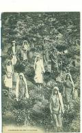 SRI LANKA - CEYLAN La Cueillette Du Thé (femmes Avec Paniers) - Sri Lanka (Ceylon)