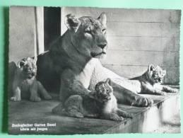 Zoologischer Garten BASEL - Luwin Mit Jungen, Lionne Et Ses Petits - BS Basle-Town