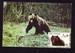 BEAR,OURS,1976,C.M,MAXI CARD,CARTES MAXIMUM,ROMANIA - Ours