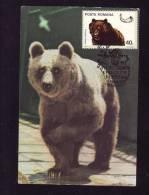 BEAR,OURS,1981,C.M,MAXI CARD,CARTES MAXIMUM,ROMANIA - Ours