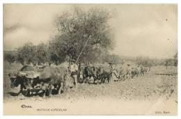 COSTUMES - PORTUGAL -  ALENTEJO ELVAS Motivos Agricolas (Ed. Karr.) Carte Postale - Portalegre