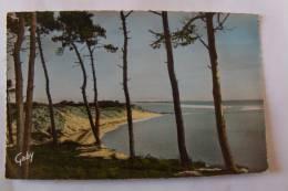 85 / Vendée - L'Aiguillon  - La Faute Sur Mer - Baie De La Belle Henriette - Frankreich