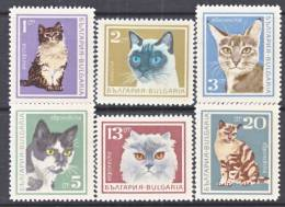 Bulgaria  1588-93   *  FAUNA  CATS - Bulgaria
