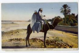 Sc�nes et Types --Nomades  n�40  �d E.Y-carte couleur--chameau--Beau plan