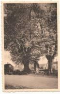 MACON (Belgique) L'Arbre Vert - Momignies