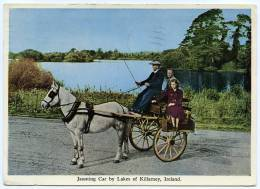 IRELAND : KILLARNEY - JAUNTING CAR - Kerry