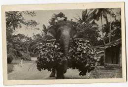 Cpa Du Sri Lanka Ceylon  Elephant Carrying His Food  THI1 - Sri Lanka (Ceylon)
