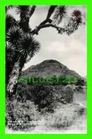 SAN JUAN TEOTIMUACAN, MEXICO - PIRAMID OF THE MOON - - Mexico