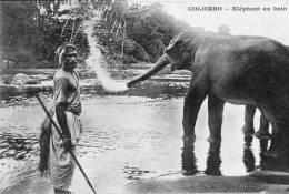 ELEPHANT - COLOMBO ELEPHANT AU BAIN - Elephants