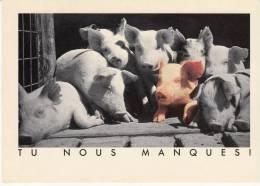 Carte Théme Les Cochons Tu Nous Manques - Cochons