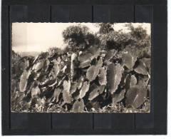 La Réunion, Les Songes Tubercule Pour Paté ,  H. Ganowski 547 éditions - Otros