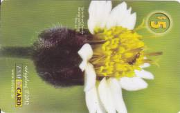 Micronesia, FSM-R-053, Flower 2, 2 Scans. - Micronesia