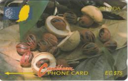 GRENADA(GPT) -  Nutmeg, Sample(no CN)